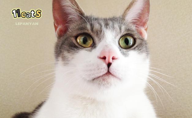 MIX・雑種の猫の画像(11Cats)