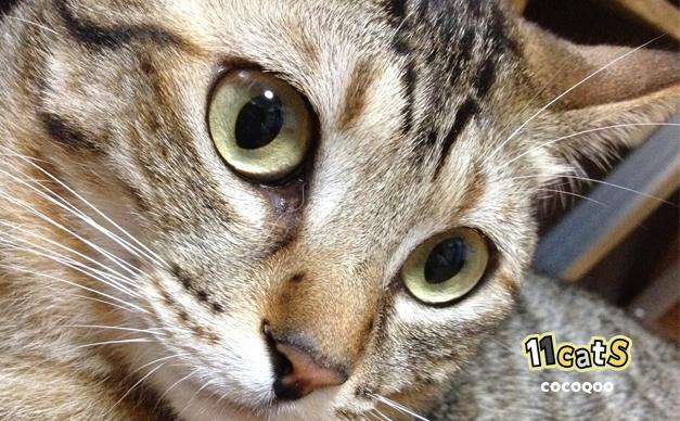 ボーとしている猫の画像(11Cats ココクー)