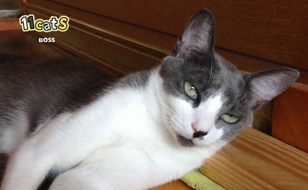 階段でくつろぐ猫の画像(11Cats ボス)