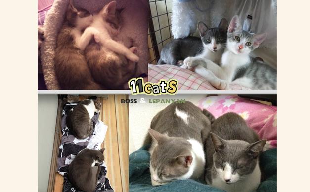 寄り添う子猫の画像(11Cats ボスとレパニャン)