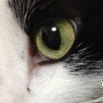 猫の目にまつわる3つの雑学 『目の色・視力・ヘビとの関係』