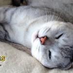 猫にまつわる、ちょっとおもしろい話「夜猫子」なんて読む?