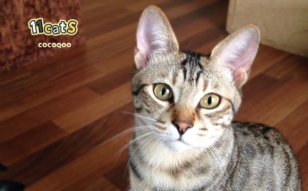 猫の画像(11Cats ココクー)