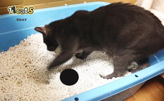 猫のトイレの画像(11Cats グレイ)