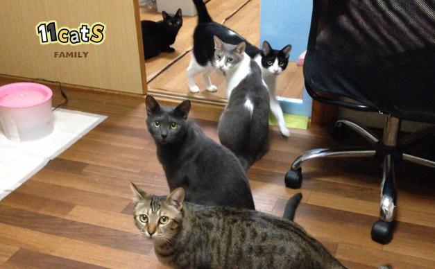猫の画像 (11cats)