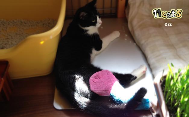 ギプスをしてる猫の画像(11Cats ギズ)