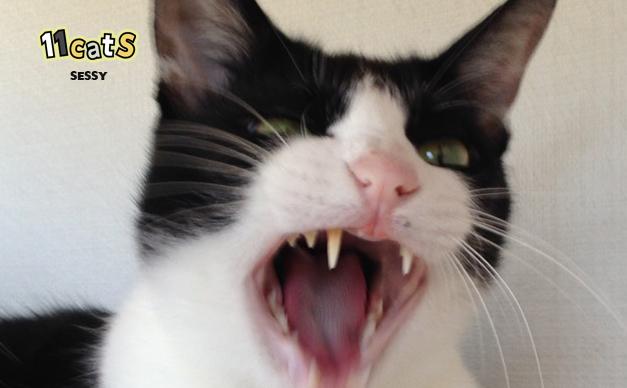 猫の口の画像(11Cats セッシー)
