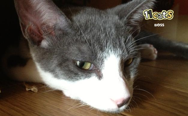 隠れるの猫の画像(11Cats ボス)