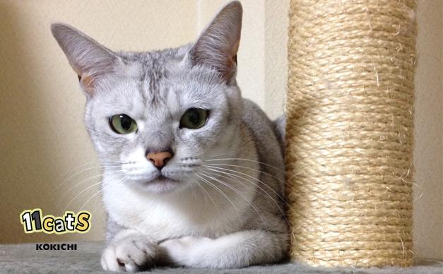 猫は木登りが上手なのに、犬が登れないのはなぜ?