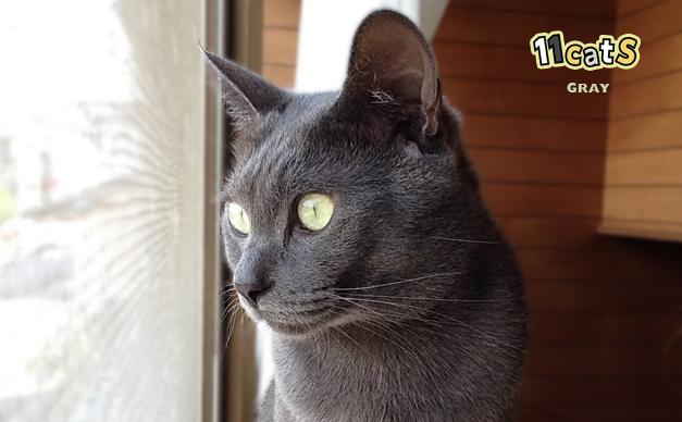 猫の画像(11Cats グレイ)