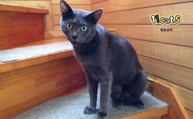 階段にいる猫の画像(11Cats グレイ)
