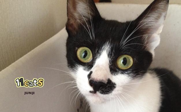 【11Catsストーリー】男の子のような名前を付けられてしまった可哀想な乙女猫 ジュンジ