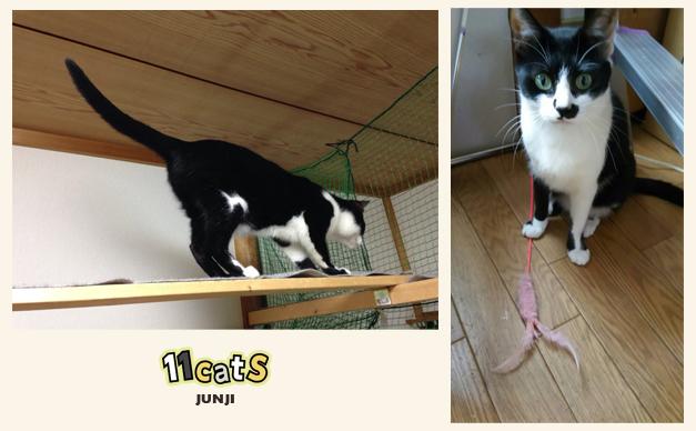 おもちゃで遊ぶ猫の画像(11Cats ジュンジ)