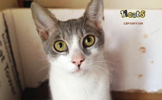 猫の画像(11Cats レパニャン)