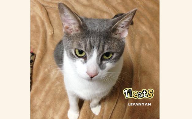 座っている猫の画像(11Cats レパニャン)