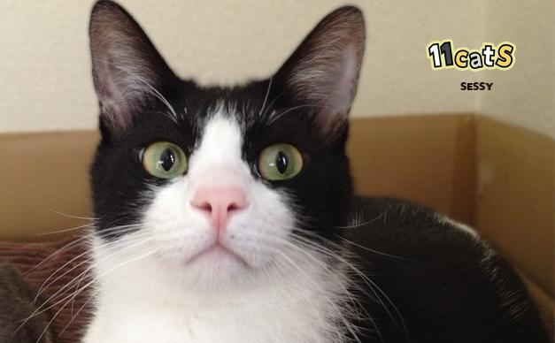 【11Catsストーリー】肝の据わった温厚猫 セッシー