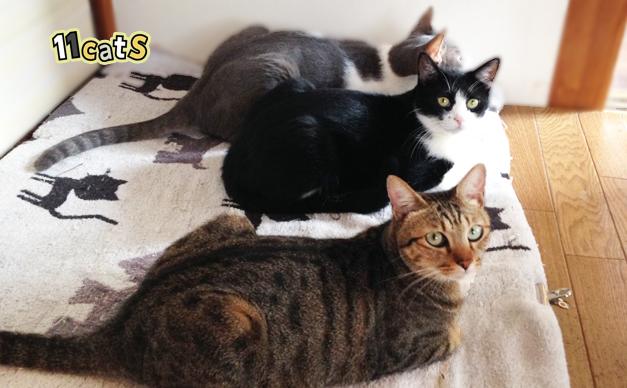 猫のイラスト(11cats)