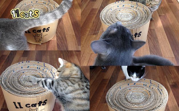 段ボールの匂いを嗅ぐ猫(11cats)