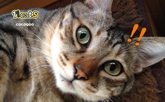 驚く猫の画像(11Cats ココクー)