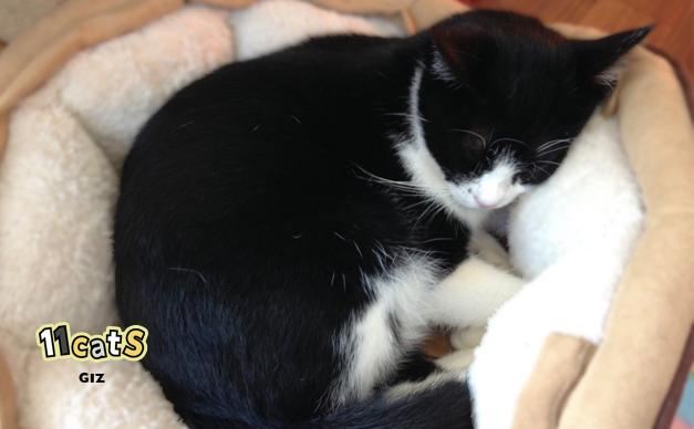 寝てる猫の画像(11cats ギズ)