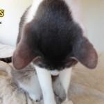 猫の『スリスリ』に隠された4つの理由と好かれるためのベストな対処法