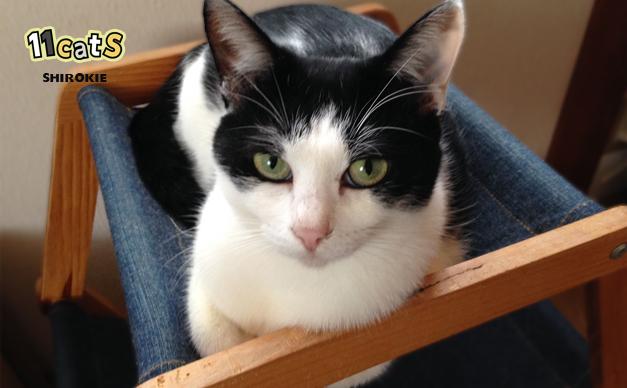【猫の気持ち】猫の態度でわかる、あなたへの「信頼度」チェック!