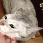 猫が喜ぶ 撫で方のコツとさわり方