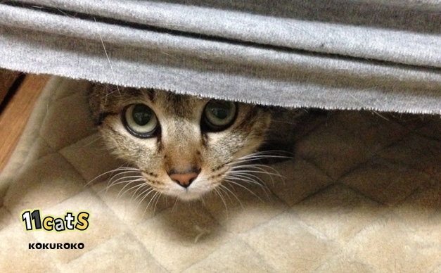 猫の画像(11Cats )
