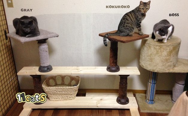 手作りキャットタワーの画像(11cats グレイ、コクロコ、ボス)
