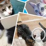 かわいい猫の画像や動画を見つけるための4つの方法
