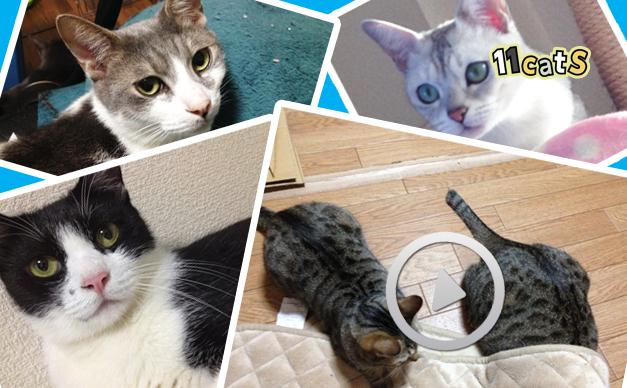 かわいい猫の画像や動画