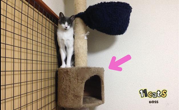 キャットタワーと猫の画像(11cats ボス)