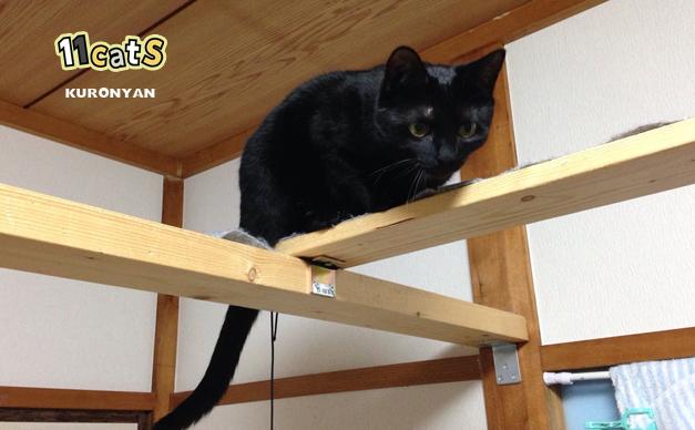 キャットウォークの画像(11cats クロニャン)