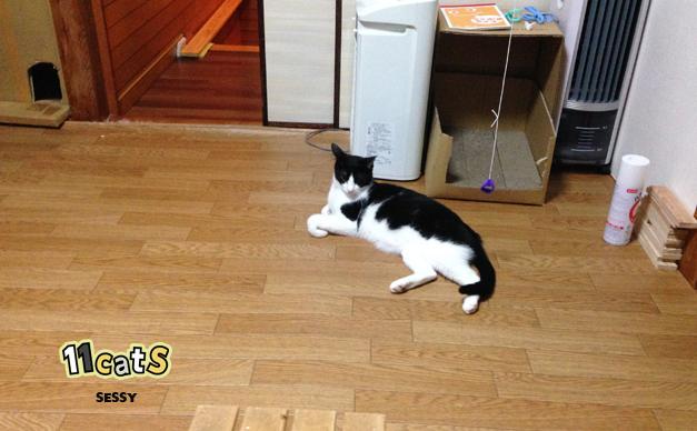 片付けた部屋の画像(11cats セッシー)